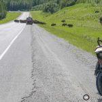 Cycling the Alaska Highway – Part 3